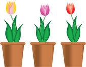 тюльпаны в горшке — Стоковое фото