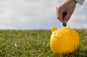 Savings yellow pig  - Stock Image — Zdjęcie stockowe