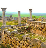 Volubilis in morocco africa the old roman deteriorated monument  — Stock Photo
