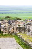 Volubilis in morocco africa the old  site — Stock Photo