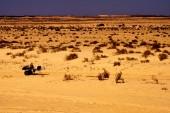 People in the desert of sahara — ストック写真