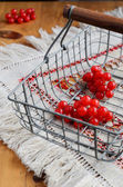 Red berries of viburnum in wire basket — Stock Photo
