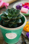 Flower shop - cactus in green pot, colorful ribbons and wrappings — Stock Photo