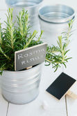 Rosemary herb in a planter with chalk board — Stock Photo