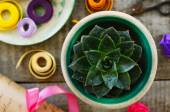 Stone rose cactus, colorful ribbons and wrappings — Stock Photo
