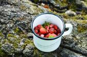 Gathering wild strawberry in summer grove — Stock Photo