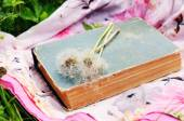 Vintage book and white dandelion flowers over bright fabric in green summer grass — Stock Photo