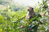 Małpa — Zdjęcie stockowe