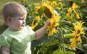 Holčička a slunečnice — Stock fotografie
