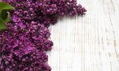 Flores lilas — Foto de Stock
