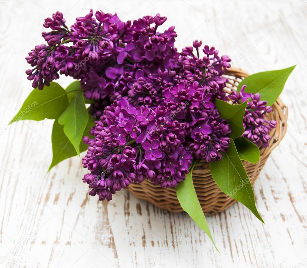 Fiori estivi lilla nel cestino foto stock ls992007 for Fiori estivi perenni
