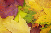 Mixture of Autumn leaves — Stock Photo