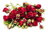 красные розы — Стоковое фото