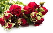 Roses rouges — Photo