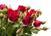 Rosas vermelhas — Fotografia Stock
