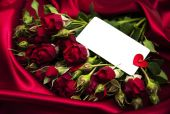 Red rose and greeting card — Stock Photo