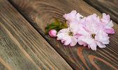 Sakura-blüte — Stockfoto