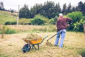 Senior man raking hay with pitchfork on field — Stock Photo