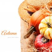 Autumn setting with harvested pumpkins — Stock Photo