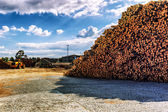 Timber stacked at lumber mill — Foto Stock