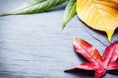 Kolorowe drzewa liści — Zdjęcie stockowe