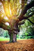 Autumn landscape with big oak tree — Foto de Stock