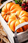 Autumn harvest setting with pumpkins — Stok fotoğraf