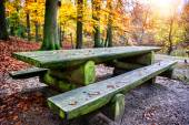 Lonely picnic place in autumn forest — Stock Photo