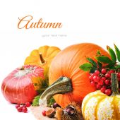 Autumn setting with various pumpkins — Stock Photo