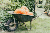 Old wheelbarrow with big pumpkins — Stock Photo