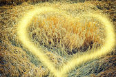 Wheat field with sunny heart element — Stock Photo
