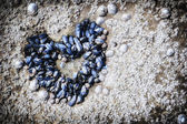 Mussels growing in shape of heart — Stock Photo
