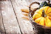 Autumn still-life with pumpkins — Stock Photo