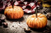 Small pumpkins in autumn setting — Foto de Stock