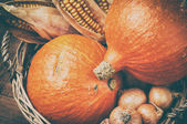 Autumn harvest setting with pumpkins and corn — Foto Stock