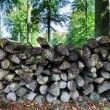 Log pile in the forest — Stock Photo #55565073