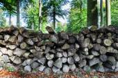 Log pile in the forest — Stock Photo