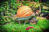 Old wheelbarrow with big pumpkin — Stock Photo