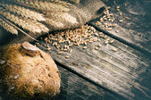 Fresh loaf of bread and wheat — Stock Photo