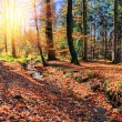 Autumn landscape with forest stream — Stock Photo #59250535