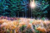 Beautiful autumn forest — Stock Photo