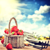 Summer harvest of fresh strawberries — Stok fotoğraf