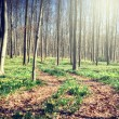 Footpath in spring forest — Stock Photo #62044993