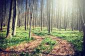 Footpath in spring forest — Stock Photo