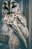 Wild owl close up — Stock Photo