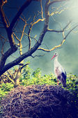 Wild stork in nest — Stock Photo