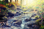 Autumn landscape with forest stream — Stock Photo