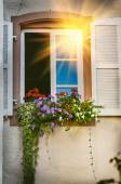 Window decorated with colorful geranium — Foto Stock