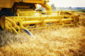 Combine harvester working at wheat field — Stock Photo