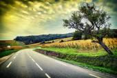 Curvy road at autumn sunset — Stock Photo